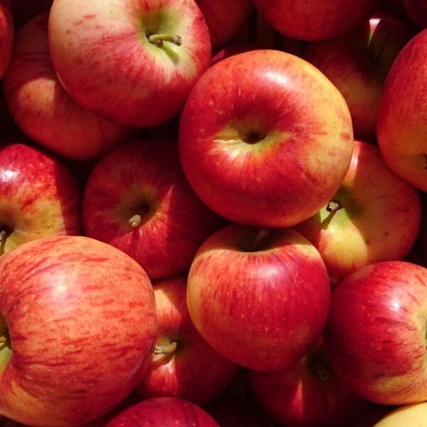 Organic Apples Produce In Motueka Valley