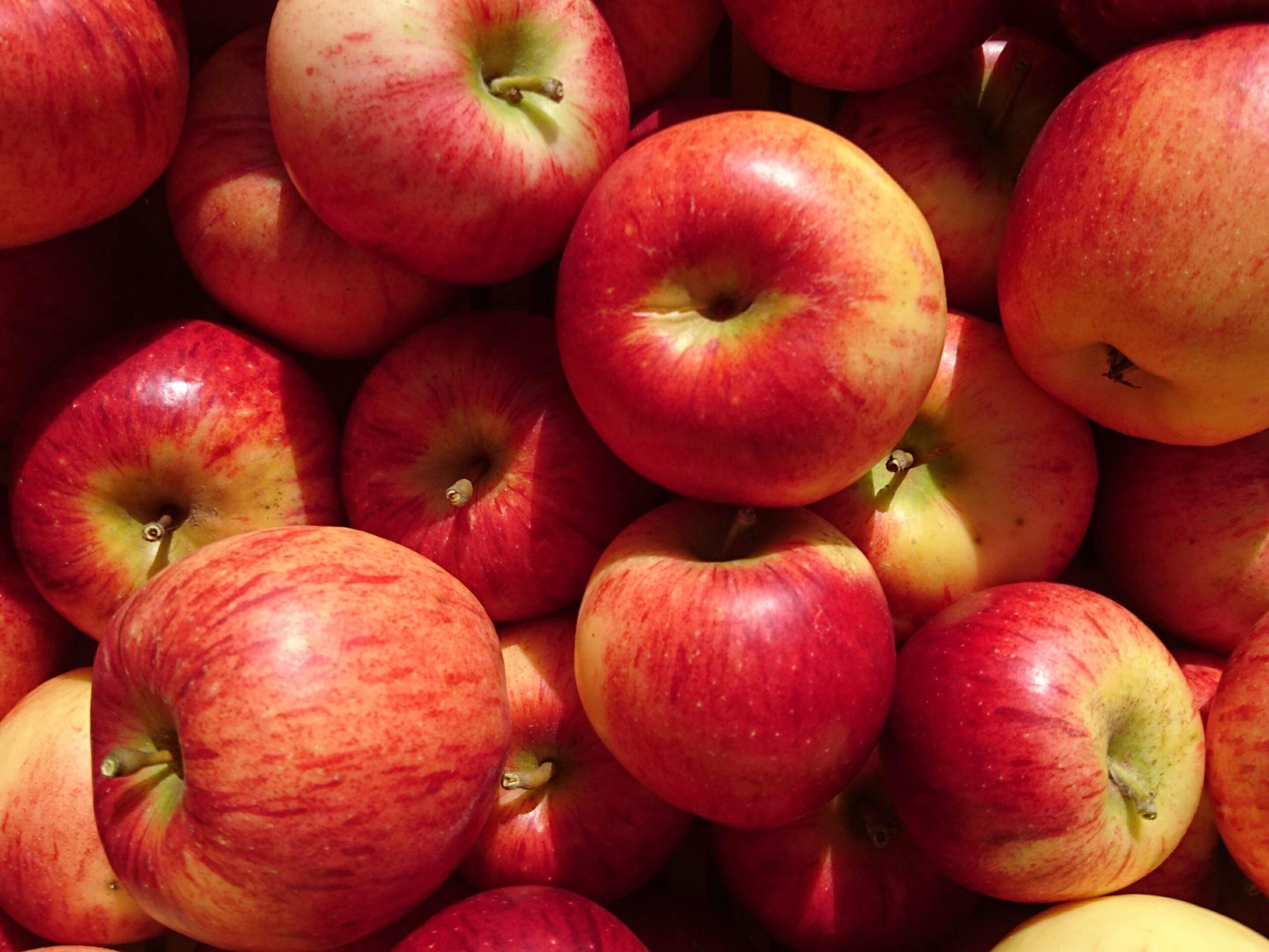 Organic apples grown Motueka Vally