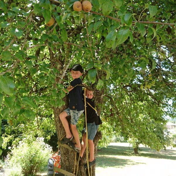 Pear Tree Climbing Kids