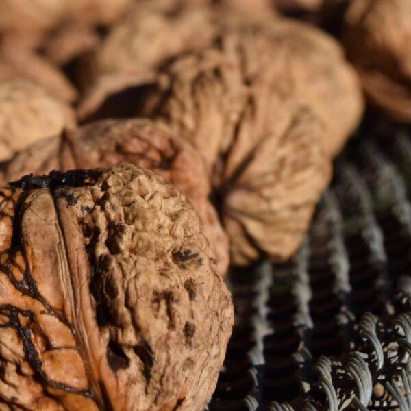 Organic Produce Walnuts