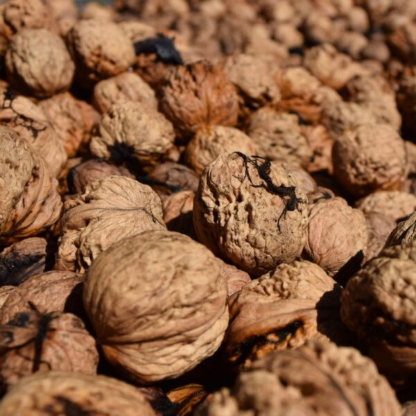 Organic Produce Walnuts Cherry Homestead