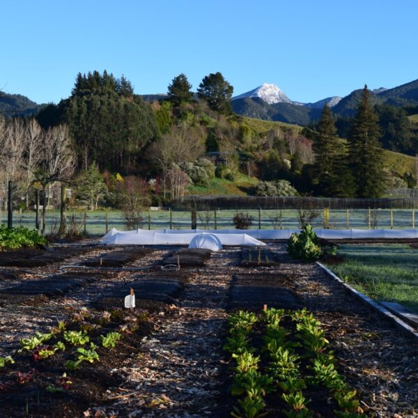 Spring In Motueka Valley